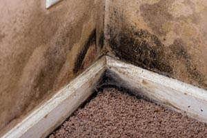 mold-wall-cleaning-paul-davis
