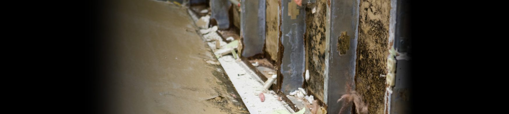 Mold remediation from Paul Davis Restoration of Bowling Green