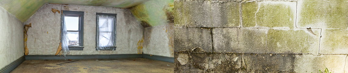 Mold remediation by Paul Davis of Central Michigan